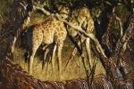 MashatuGirafe